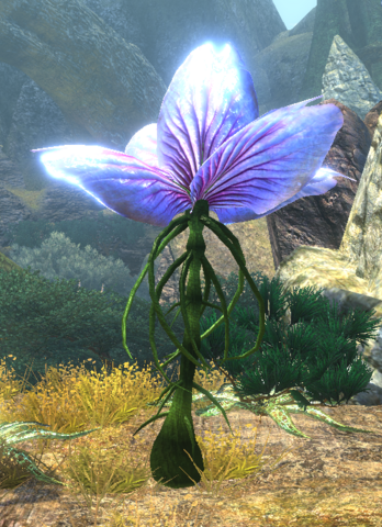 File:Unknownplant6.png