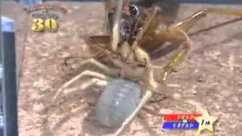 Scorpion  Define Scorpion at Dictionarycom