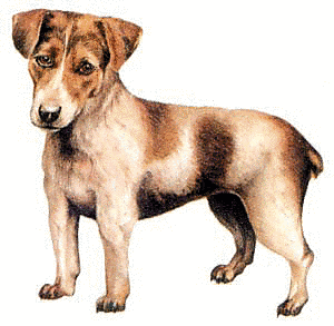 File:Jack Russell.png