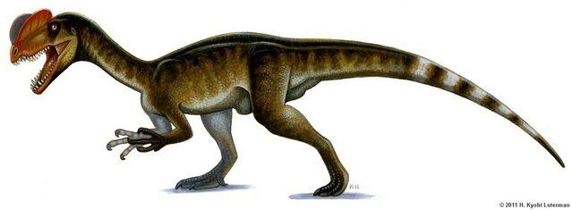 File:Dilophosaurus by kyoht-d3diw65.jpg