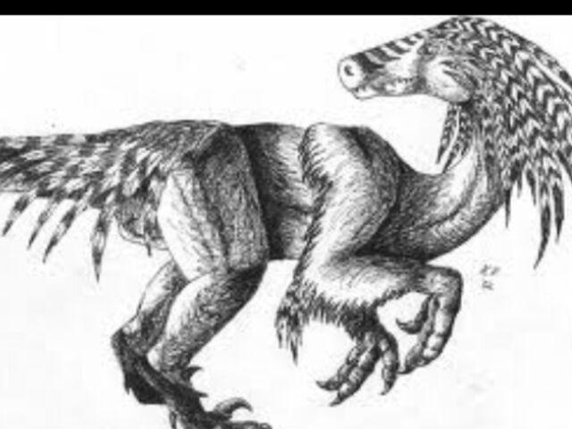 File:Featheredraptor13.jpg