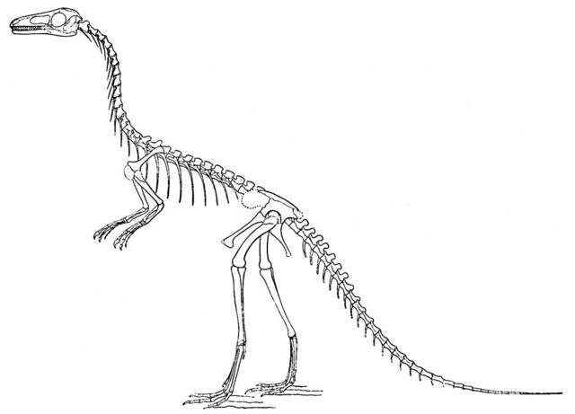 File:1024px-Compsognathus longipes.jpg