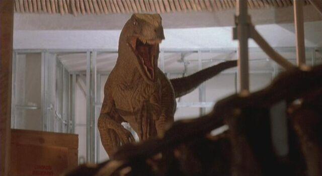 File:Velociraptor 7.JPG