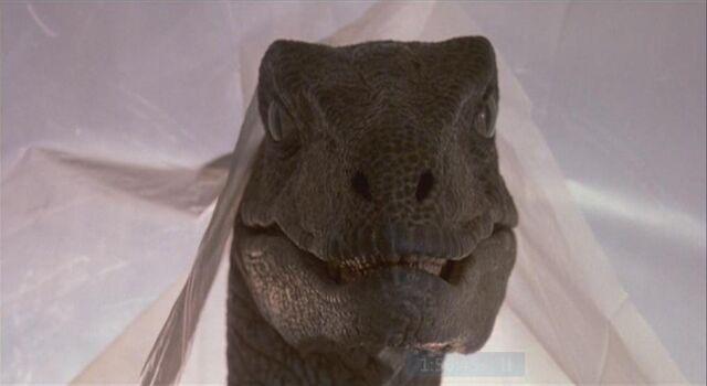 File:Velociraptor 8.JPG