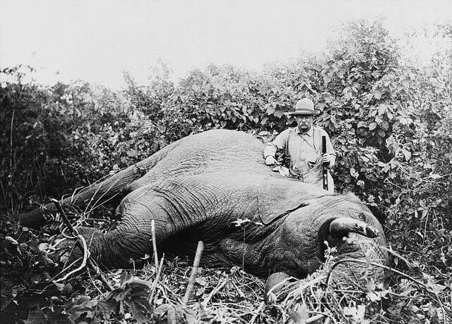 File:Roosevelt safari elephant2.jpg