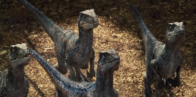 File:Raptor11.jpg