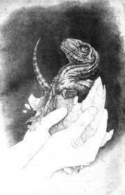 Babyraptor