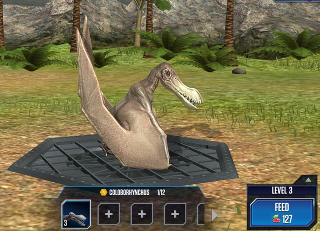 File:Coloborhynchus Base.jpg
