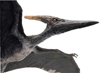 pteranodon jurassic park wiki fandom powered by wikia