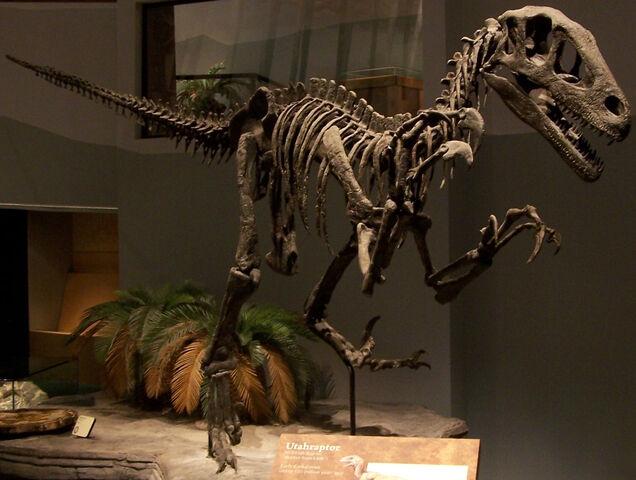 File:Utahraptor skeleton namal.jpg