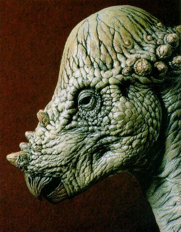 File:Pachycephalosaurus J01-Dinosaur-Face.jpg