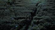 Long-Grass