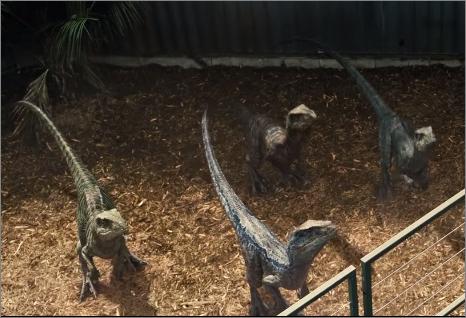 File:Velociraptors.png