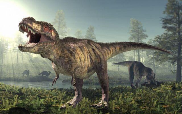 File:Tyrannosaurus-rex-zoom-800x500.jpg