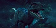 Jurassic world blue the raptor by sonichedgehog2-d8qhboa