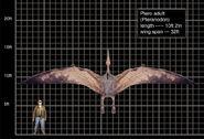 Ptero adult