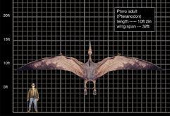 Ptero adult.jpg