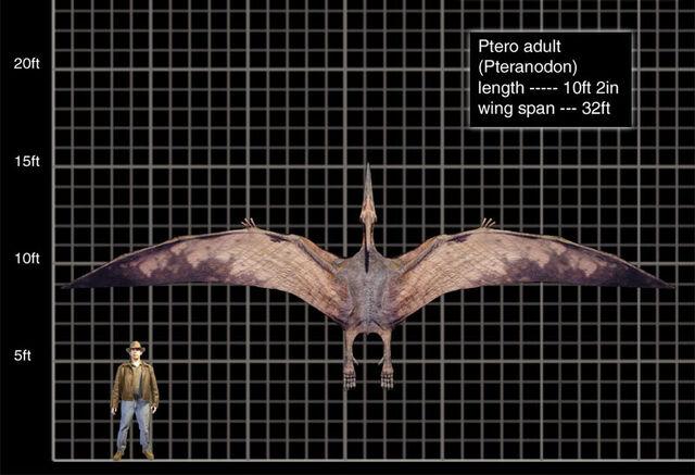 File:Ptero adult.jpg
