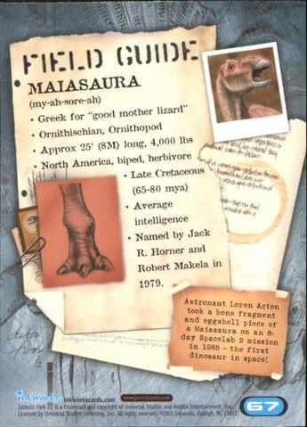 File:2001 Jurassic Park III 3-D 67 Maiasaura back.jpg