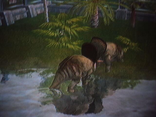 File:2 Torosaurus are fighting for territory.JPG