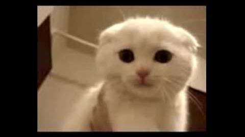 Kitty Cat(its Miau!)