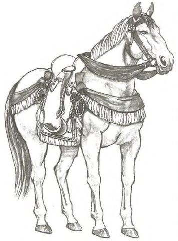 File:Horse 3.jpg