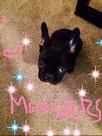 5-11-14 LittleMonsters.com 001