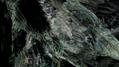 SHOWstudio-Raven-04