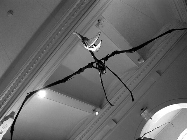 File:NYC pterosaur.jpg