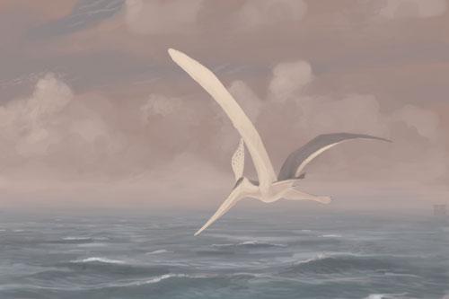 File:Pteranodon-sternbergi jconway.jpg