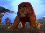 Simba-Pridelanders