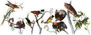 Google - 226th Birthday of John James Audubon