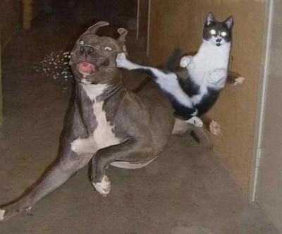 File:Cat kicks dog-12362.jpg