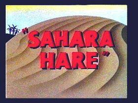 Sahara-Hare-01