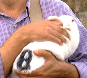 Archivo:Bunny2.jpg