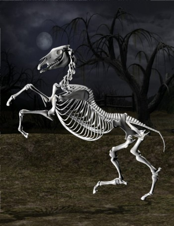 File:DAZ Productions - Skeleton Horse