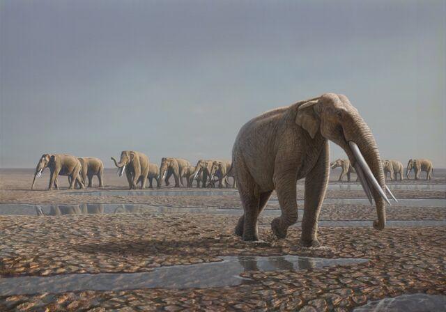 File:Stegotetrabelodon-herd-colour1.jpg