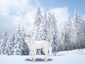 White Wolves 17834