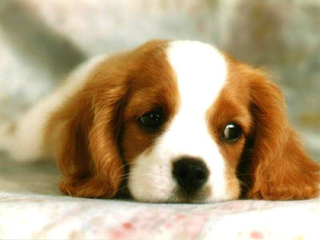 Cute-Dog-dogs-13286656-1024-  Dogs