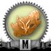 Mwach suidafrika boss bronze 90x90