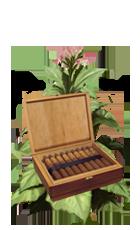 Cuba1 tobacco