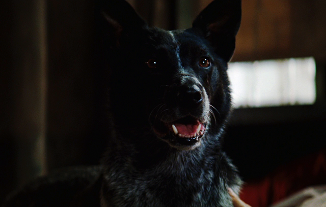 File:Banner's dog.png