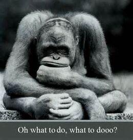 Monkey thought