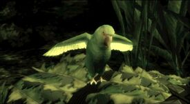 The End's and Emma's parrot