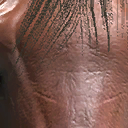 File:Dhorse head1.png