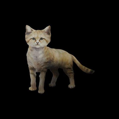 File:Sand Cat.jpg