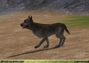File:Wild Dog 1.jpg