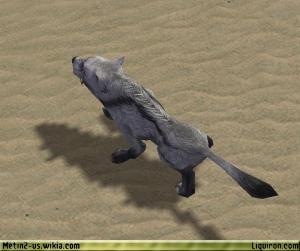 File:Alpha Grey Wolf 3.jpg