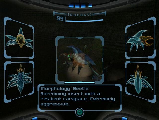 File:Beetle Scan Dolphin HD.jpg