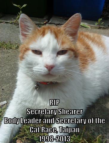 File:RIP Shearer.png